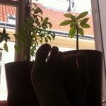 Spaß 11/13 – Barefootin' !