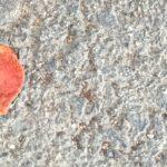 Konsumauszeit – voll versagt und eingekauft
