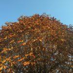 Mein Motto im Oktober – Ruhe und innere Kraft