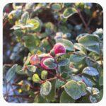 Mein Motto im Dezember – Gemütlichkeit