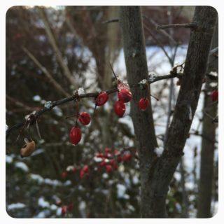 Januar * Stille wahrnehmen und genießen