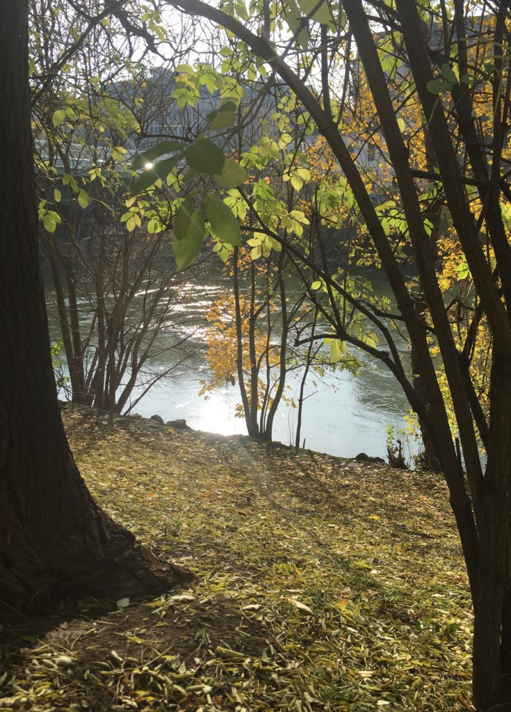 sonniger Donaukanal